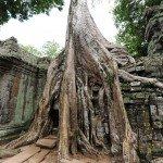 Angkor-3992
