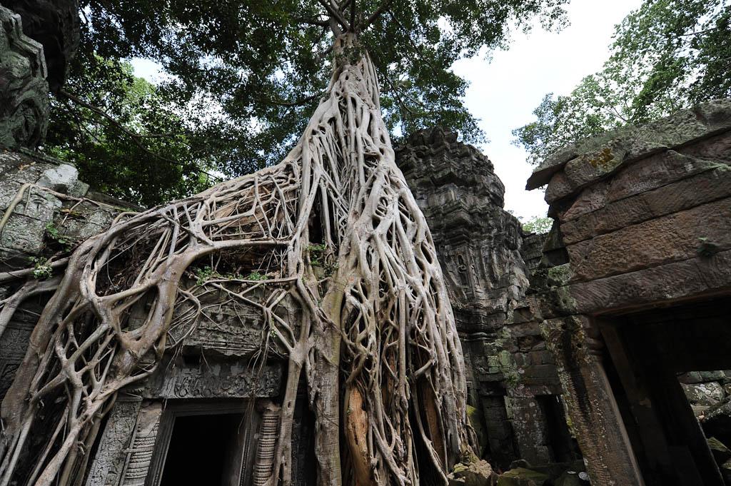 What Wat? Angkor Wat!