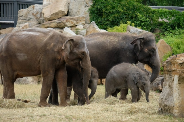 Baby Elephants at Prague Zoo