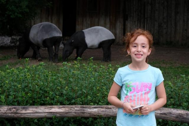 Tapir at Prague Zoo